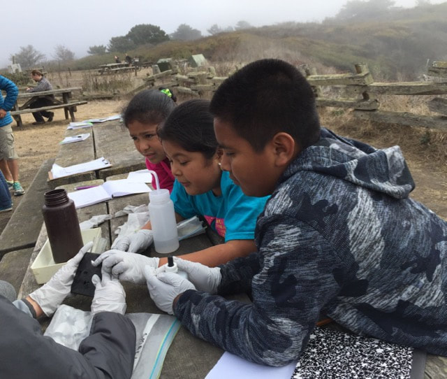Students at the San Gregorio State Beach lagoon determine the pH by comparing the color of test and control water samples.