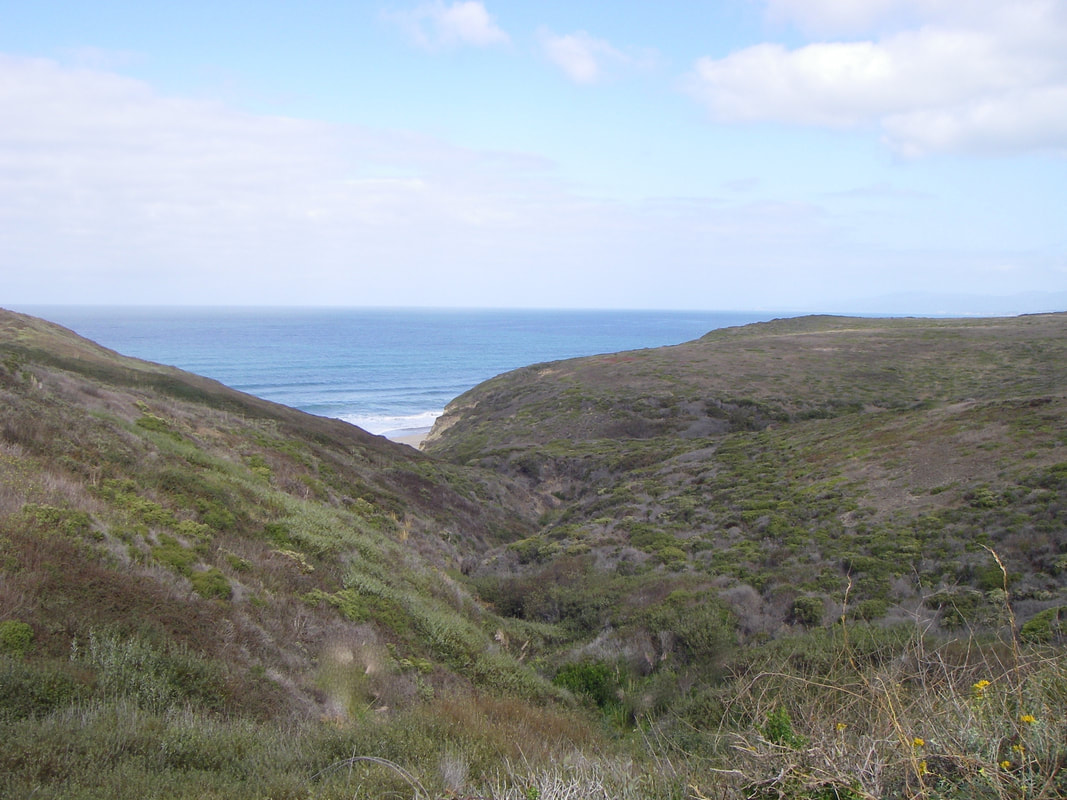 Coast-side hills with no pampas grass in sight.