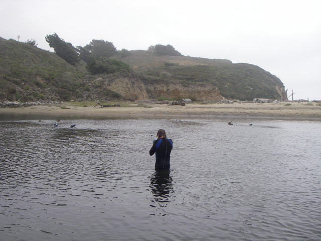 Researcher in a wetsuit standing in the hip-deep water of the San Gregorio Creek lagoon with testing equipment.